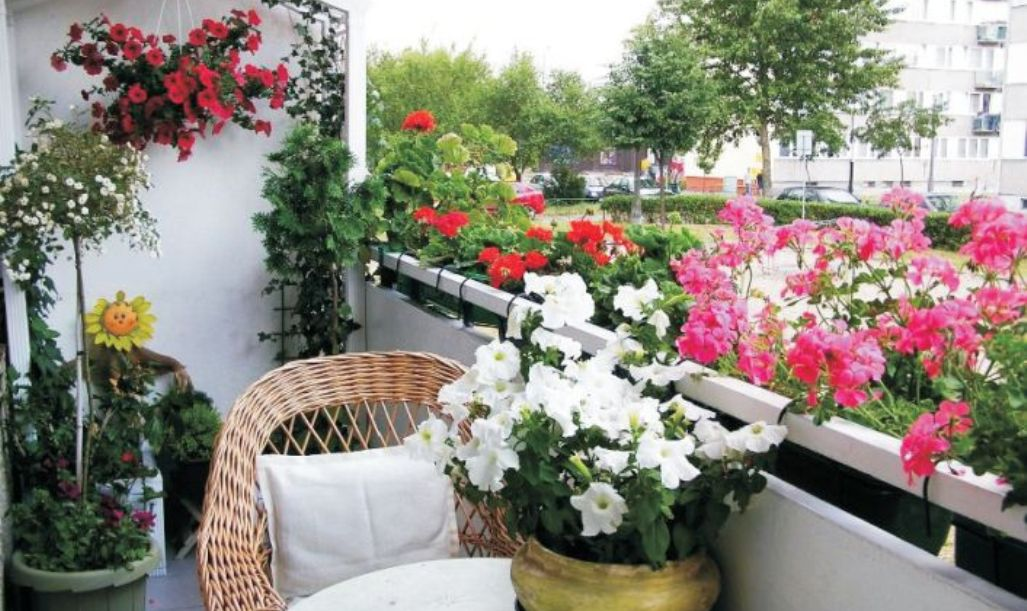 Красивые цветы на балконе.