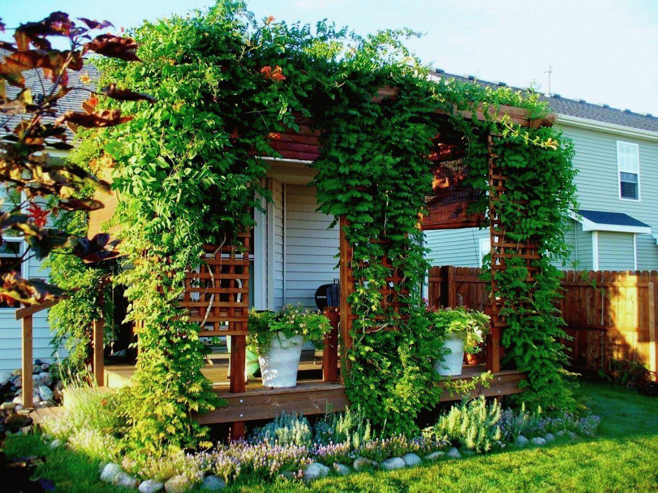 приятно вертикальное озеленение на даче своими руками фото обозначенной