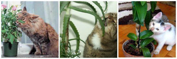 Такое поведение свидетельствует о том, что кошке чего-то не хватает. Впрочем, возможно, не хватает ремня…