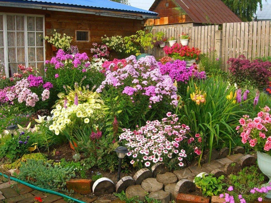 Цветы на даче в картинках