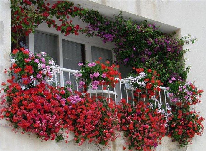 Вьющиеся цветы на подоконнике