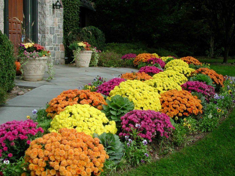 Уличные цветы которые сажают осенью 97