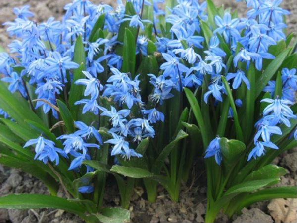 Весенние цветы отличаются насыщенными и яркими оттенками