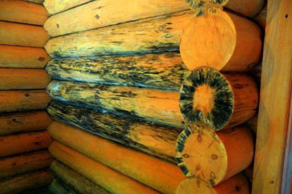 Внутренние стены, пораженные грибком — последствия неутепленных стен
