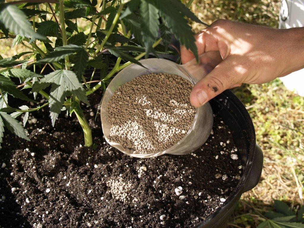 Удобрения выращивают коноплю производные марихуаны