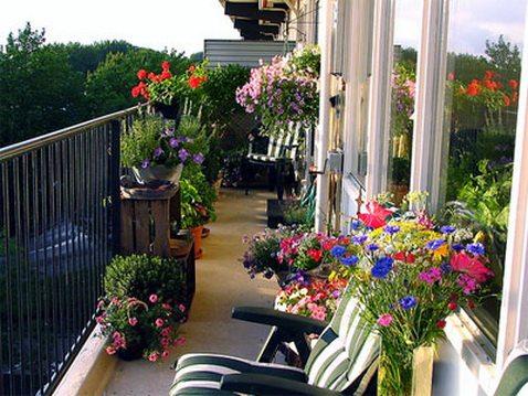 Выбор растений для балкона – увлекательное, но ответственное занятие